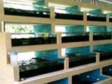 專業定做觀賞魚缸,海鮮缸,吃奶魚池