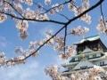 樱花国际日语学习