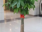 宁波绿植出租,宁波绿植租赁,宁波租植物,宁波租绿植