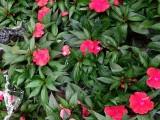 武汉苗木基地批发零售送货施工,各类型的竹子花坛植物销售养护