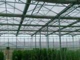 供应山东德州豪达瑞科种苗繁育阳光板智能连栋温室厂家