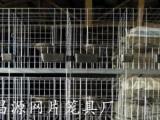 广式鸽笼阶梯式鸽笼12位鸽笼价格鸽笼厂家肉鸽养殖笼