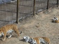 聊城到济南动物园一日游