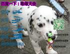 哪一家宠物店卖纯种健康的斑点狗多少钱一只