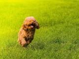 狗狗意外骨折不要怕,杭州宠物医院24小时为你待命