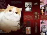 北京历史较悠久的猫舍 开放纯种猫配种业务