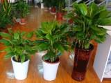 办公室写字楼绿植租赁绿植租摆花卉租赁园林绿化
