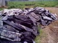 辽阳长年油毡纸沥青废SBS防水卷材大量回收