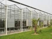 山东阳光板温室大棚 专业的智能温室大棚供应商推荐