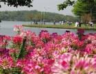 畅游大自然中醉美较好玩休闲之地松山湖农家乐