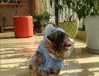 粽虎斑加菲猫母宝宝 无病无藓转让 有意的请看一下描述