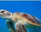 特色创意展示海洋主题展海洋生物水母展出租