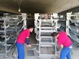 养殖专用设备 平带履带 清粪机 自动喂料机 捡蛋机
