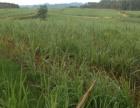 武宣金鸡 700亩甘蔗地出租