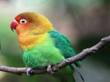 台州临海本地出售观赏鸟专业繁殖