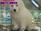 大白熊多少钱一只/在哪里能买到