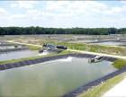 藕池水产养殖防渗膜厂家直销 国标HDPE土工膜抗紫外线防辐射