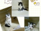 自己养的猫猫宝贝找新家了!