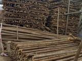 绿化杆 杉木杆 支撑杆 顶杆 园林绿化