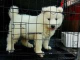 惠州惠阳24小时宠物托运空运汽运客运