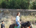 骆驼(白色、棕色)、马(蒙古跑马)、正宗白牦牛出售。