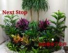 沈阳花卉批发市场绿植租摆租赁养护植物墙绿植墙