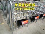 母猪定位栏猪舍的必备产品整套定位栏十位一组限位栏