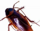 专业除虫除蚁~灭四害