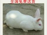 出售孔 雀 鸵 鸟 鸽子 羊驼 香猪 野兔 斗鸡
