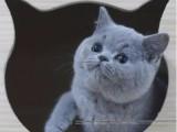 杭州南京苏州宁波布偶折耳波斯短毛猫管方网站 双飞猫