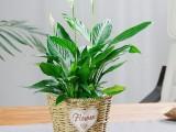 武汉公司园艺租赁写字楼园林价格,武汉室外植物价格单位花卉租摆
