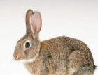 天麻种苗,兔子种苗开始预订啦,签订回收合同