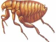 烟台海阳莱州灭臭虫 灭跳蚤 灭蚂蚁 专业杀虫公司