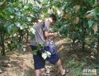上海南汇农家乐 十一旅游推荐 钓鱼烧烤划船 采摘猕猴桃桔子