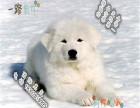 家里有小孩能不能养大白熊会不会咬人