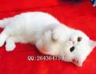 重庆哪里有卖纯种健康加菲猫的,重庆的猫舍在哪里