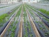 厂家批发农用塑料薄膜 黑色地膜 白色地膜 除草专用黑地膜