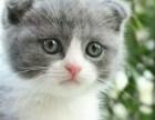 折耳猫哪里有得卖 多少钱
