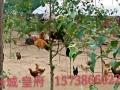 农家兴农牧家庭农场