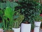 深圳绿植租赁买卖 鲜花绿植 商场植物租摆 绿化养护