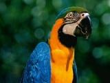 金刚鹦鹉繁殖中心 批发 零售