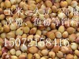 旺川饲料现金求购玉米 大豆 高粮 豆粕