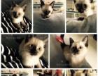 出售各种名种幼猫