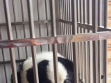 广州荔湾哪里可以寄养宠物狗广州寄养一天多少钱