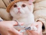 養寵無憂貓磨爪的原因