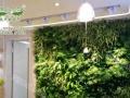 全自动菜墙 生态墙,绿墙加盟 无土种植 植物墙花盆
