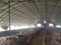 镇江丹徒区 100亩土地 养猪场出租