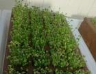 多植物育苗生长器加盟