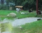 安贞桥宠物寄养猫狗 长期代养老年宠物 独立寄养散养 可接送