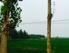 800亩农业旅游观光、采摘园项目寻求合作